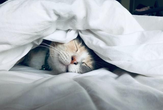 sleep and destress to build immune health